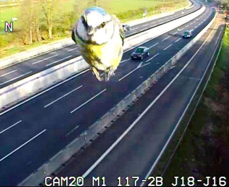 Photobombing blue tit caught on a Highways England camera on the M1 in Northamptonshire. Incredible! https://t.co/VZ9Q09swiK
