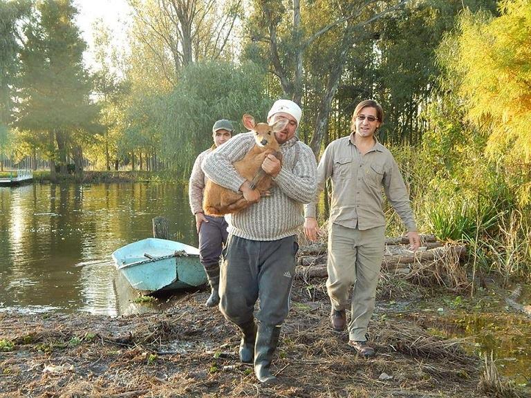 Un poblador salvó a un ciervito en el Delta, se está recuperando en nuestra fundación: https://t.co/AEgRGhXCHT https://t.co/iQWSUGLyod