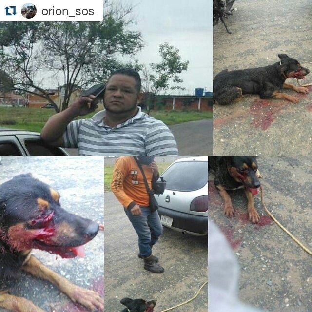 #instagram orion_sos publica estas imágenes d sujeto en #Barinas q arrastró c/su carro a la perrita sabes quién es? https://t.co/wUhzfjg8AX