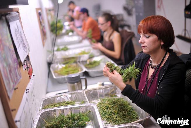 'What heaven looks like': Take a tour of a Colorado pot shop and its grow
