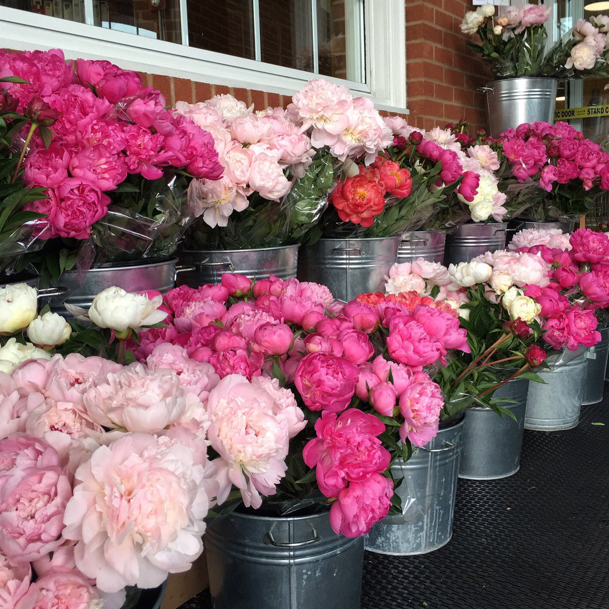 #Peonies have arrived! Add some fragrance to your weekend. #HeinensBlooms https://t.co/MtmSZG202d