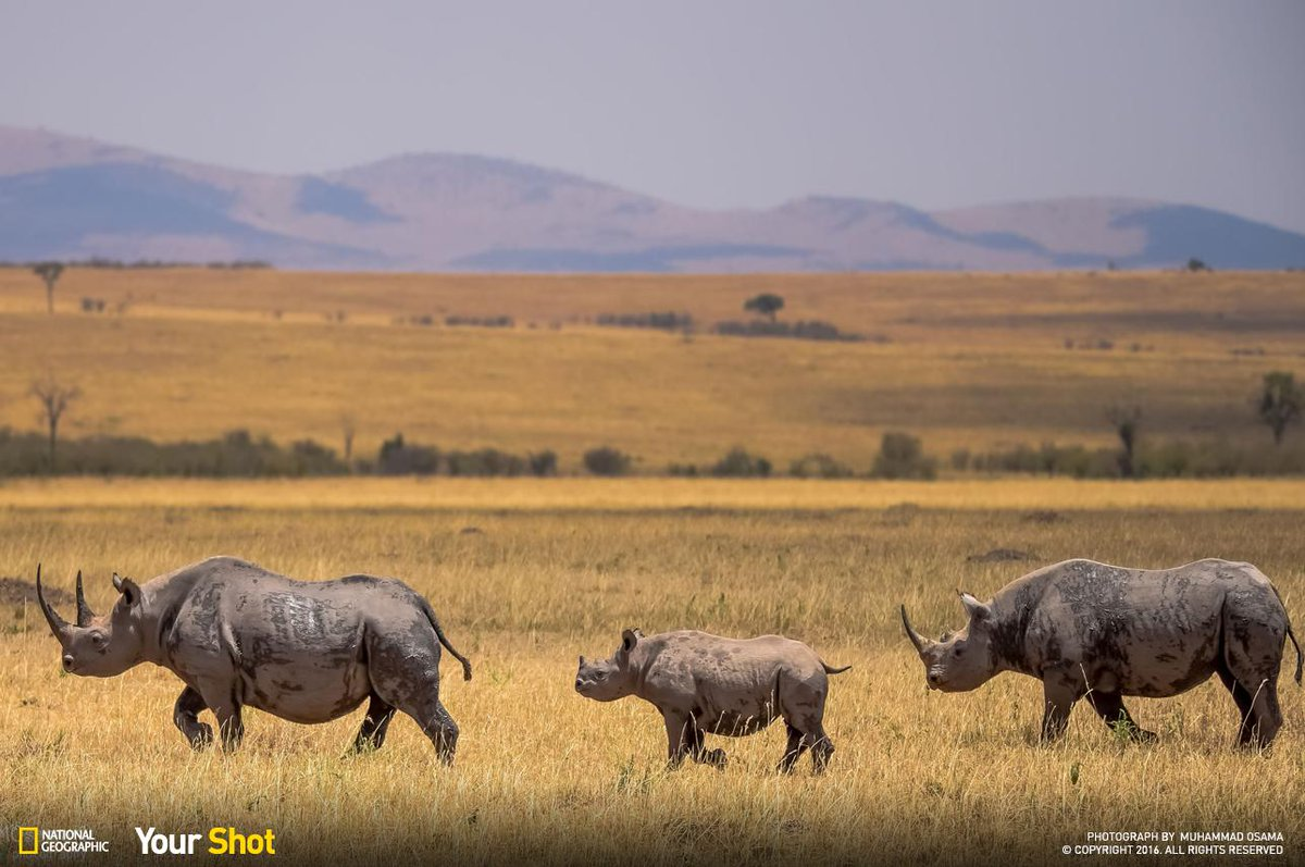A Group Of Rhinos Is Called 24