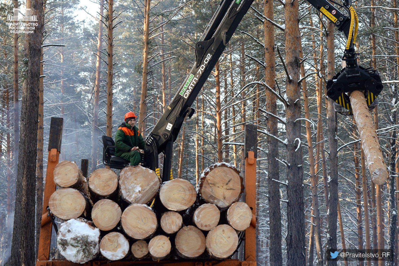 День, прикольные картинки про лесную промышленность