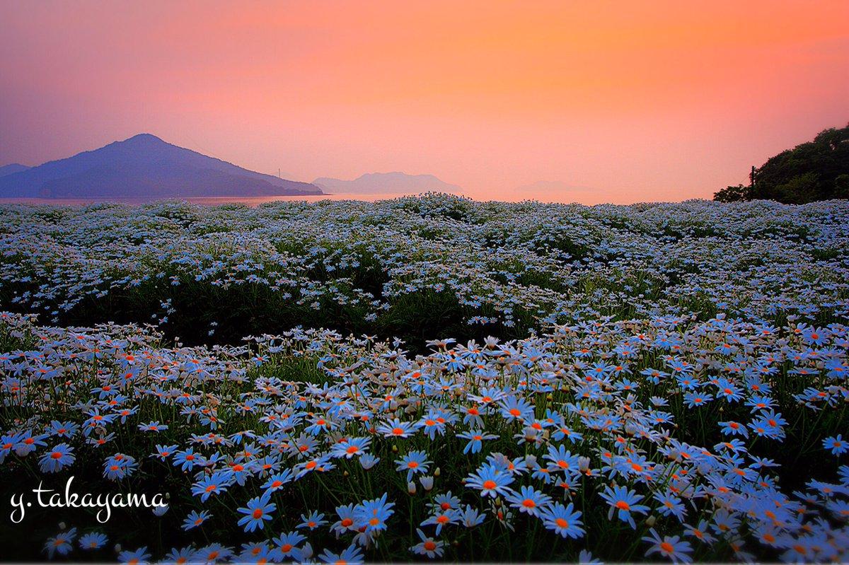 3時起きで早朝ドライブ。 久々に朝活してきました。 #mysky  #takaphoto #flowers https://t.co/9HX7nXibjs