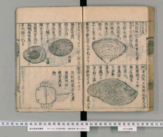 江戸時代に描かれたカブトガニ がたまらん! 深海生物でもないし、岸でいくらでも観察できた筈なのに 何なんだ!この手抜き感といったら!! https://t.co/aYTpi0tijL