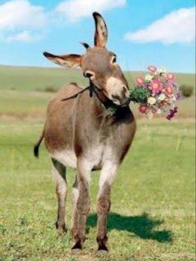 Jerk Donkey JerkDonkey – Donkey Birthday Card
