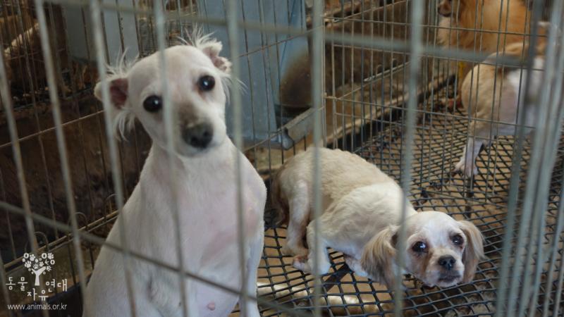 [TV동물농장 방영] 강아지 공장 철폐를 위한 서명에 동참해주세요! 정부에 동물보호법 개정을 촉구해주세요!! 서명하기 링크>> https://t.co/lgLNJzB1xD https://t.co/foiPWFnhN6