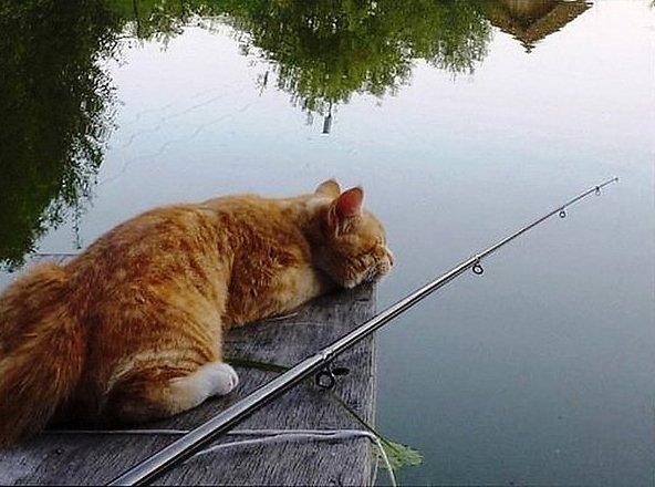 про кота рыбака