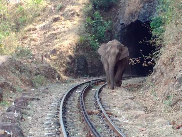 CigHJHWUkAE5Cqc?format=jpg&name=900x900 - The Nilgiri mountain elephants