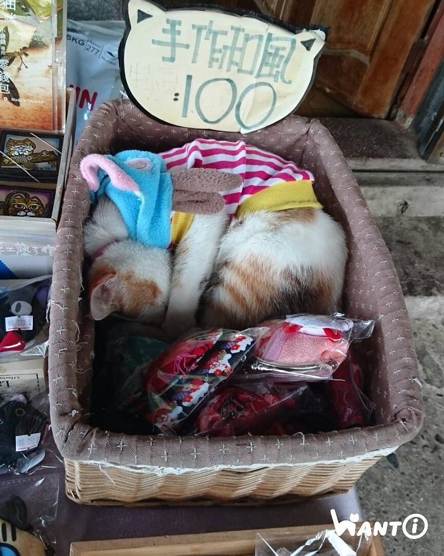 world cat boats for sale by owner
