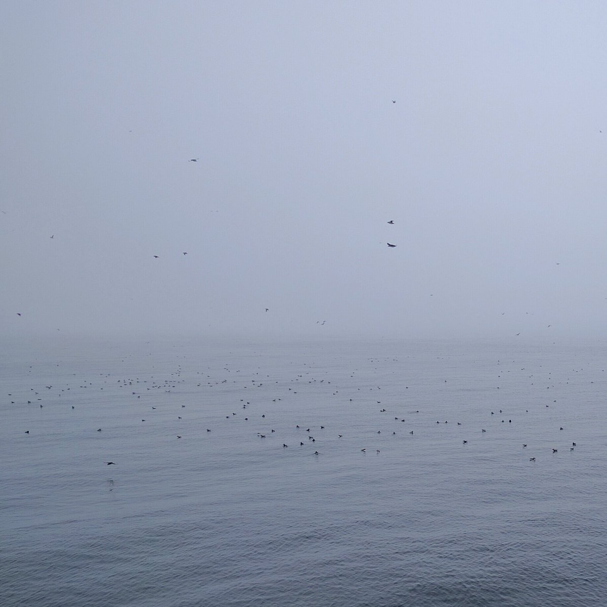 So many puffins during the O'Brien's Boat Tour in St. John's, Newfoundland and Labrador