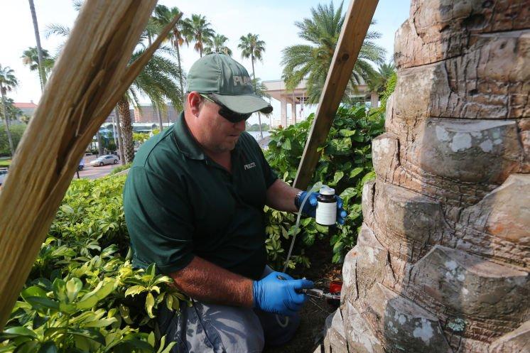 Hillsborough is ground zero for a disease killing palms across theregion