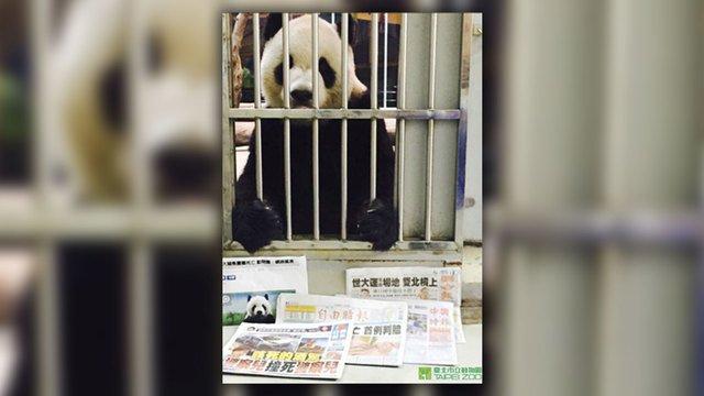 Panda's 'proof of life' photo debunks death rumors