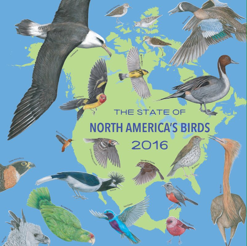 The 1st joint conservation assessment of North America's birds! https://t.co/JXtVgwhmDz #StateoftheBirds #BirdYear https://t.co/HYCVxYoCpl