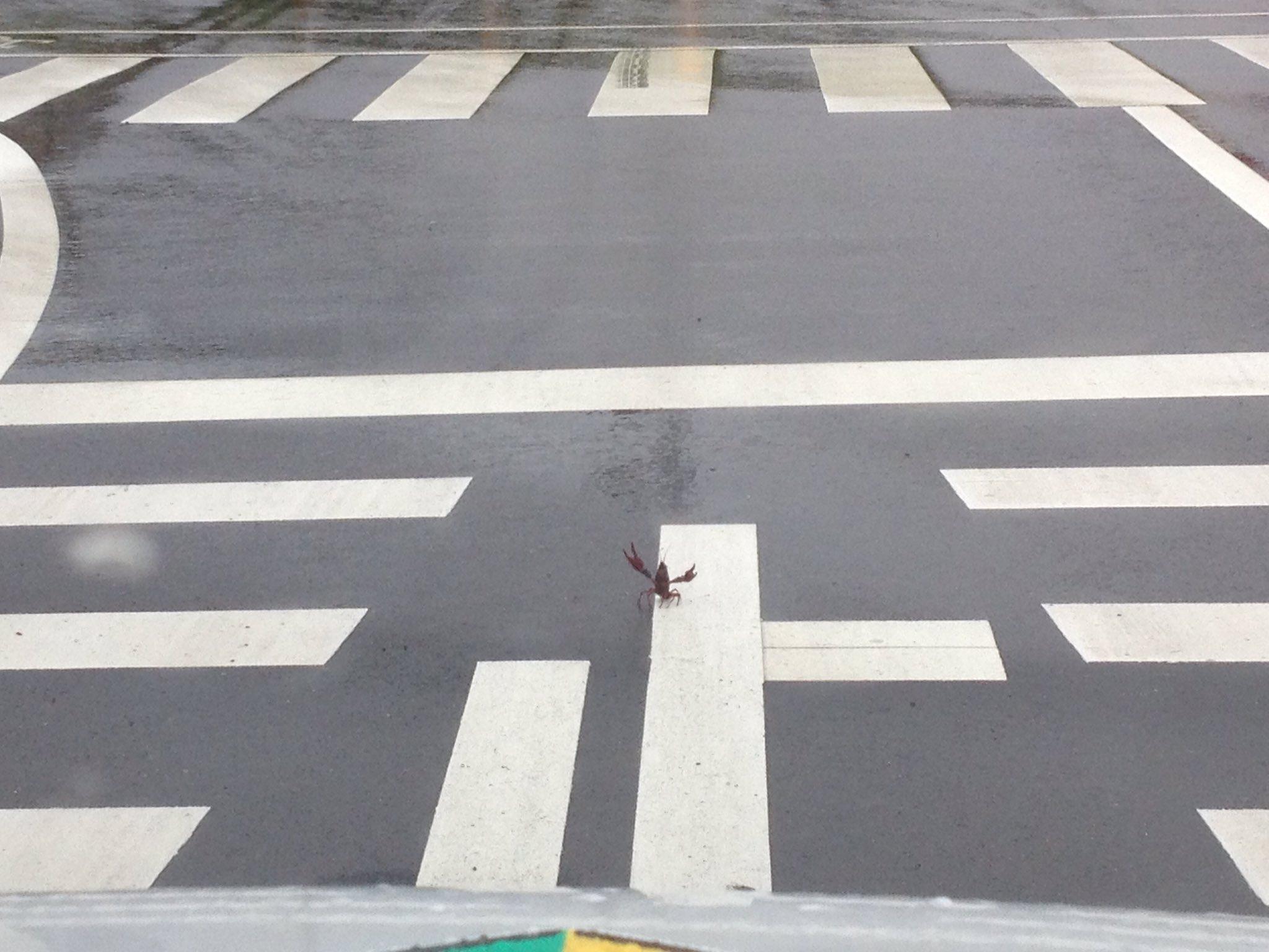 自動車に勝負を仕掛けるある動物wwwwさすがに勇敢すぎるww勝てないだろww