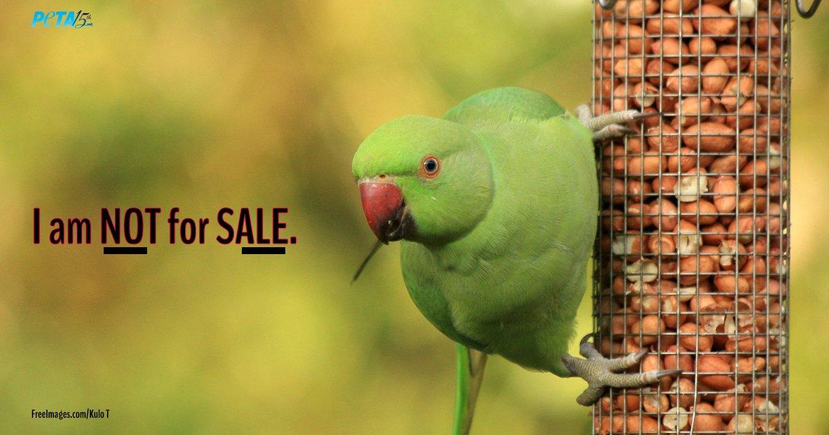 PETA India on Twitter: