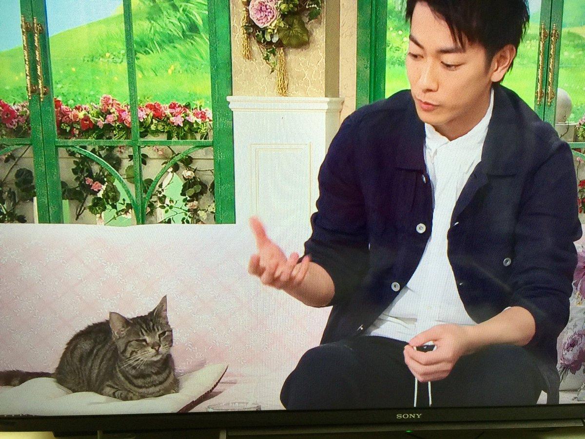 『徹子の部屋』に佐藤健と出ている猫のパンプくんが、ちゃんとゲストしてる!天才猫だ! https://t.co/9Cg8x2rwCS