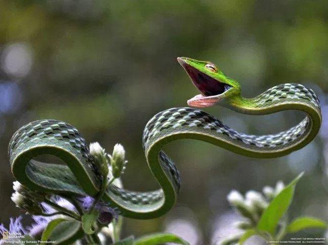 緑色の紐?まるで合成のようないい笑顔の細長~いムチヘビ!?