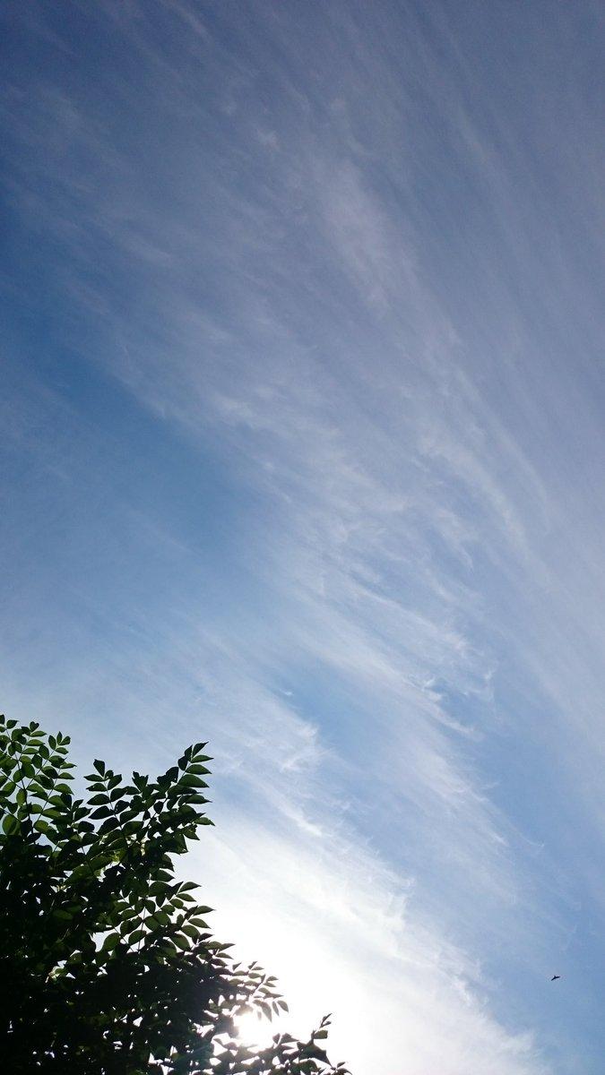 おはようございます   朝ドン!ぐらぐら... 昨日から余震増えてるような  雲もいつもと違う? 鳥も高く飛んでる?(豆粒キャッチ)わかるかな?(笑)  なすびの花~♪