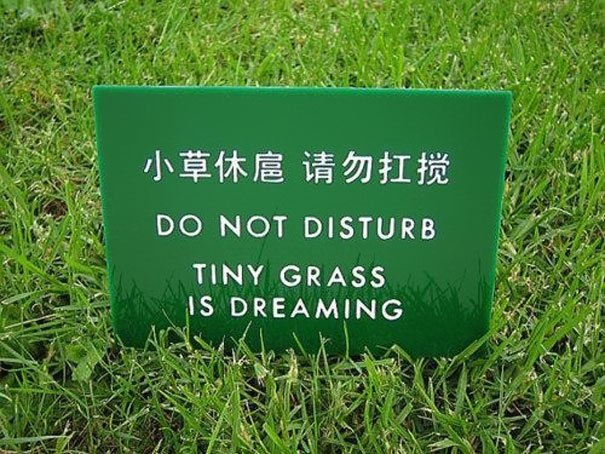 The best Chinese translation fail ever. Who wants to disturb the dreams of grass? Not me. https://t.co/hyOleVwaU7