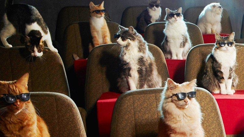 Картинка кинотеатр смешное, месяцем