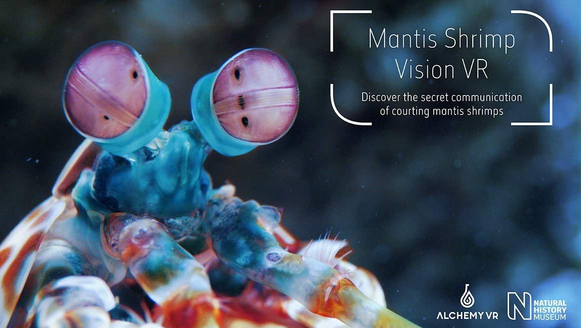 Virtual reality partnership launches with mantis vision experience