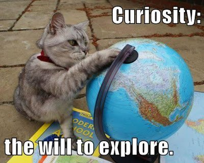 a #growthmindset cat knows the power of curiosity: the will to explore! More: https://t.co/cvJZo6Ksdm #Caturday :-) https://t.co/L8pZiOtbOR