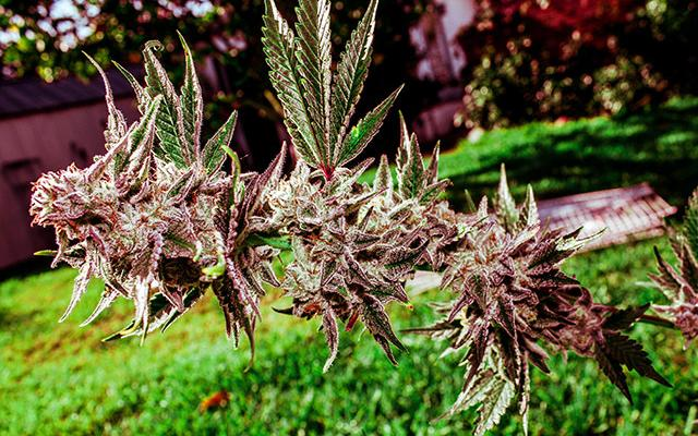 Grow Hack: Make Your Outdoor Grow Bee Friendly