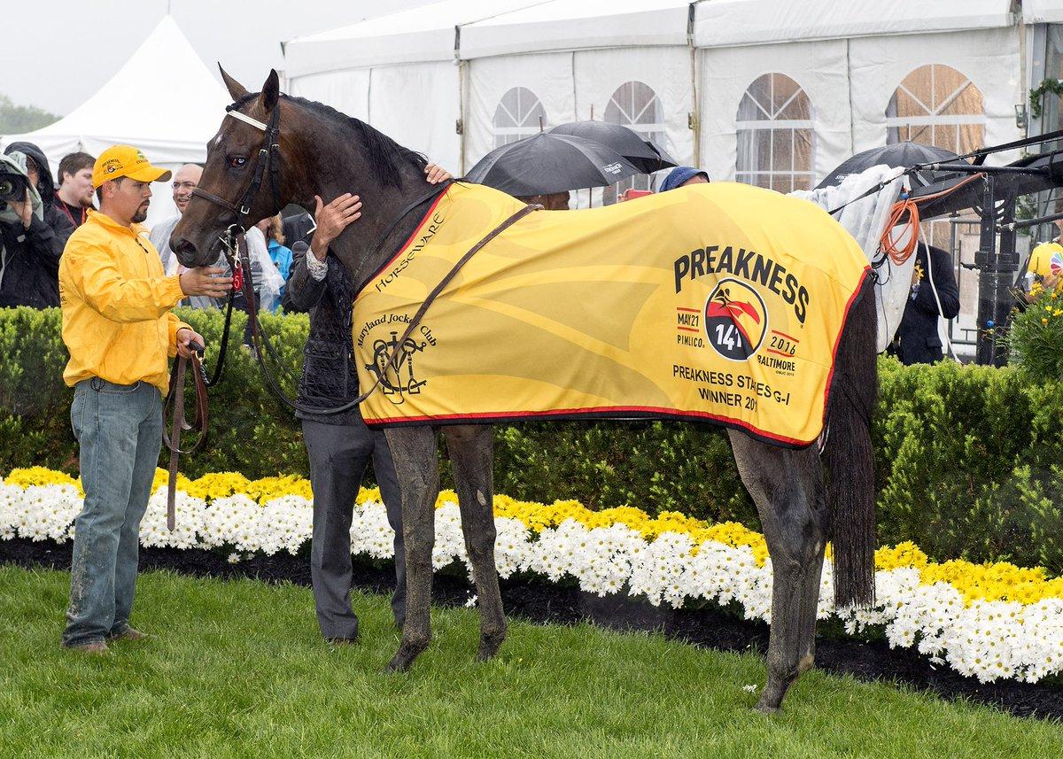 Exaggerator wearing his #Preakness winner's blanket. Photo: Maryland Jockey Club. https://t.co/EaLTZINh9N