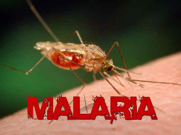 Thumbnail for 23. Malaria