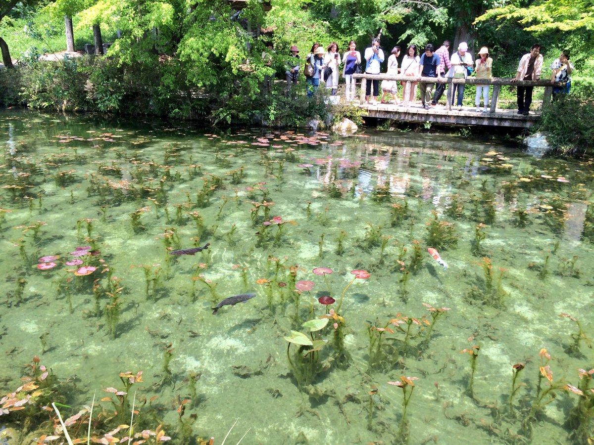 岐阜県関市板取にあるモネの池に行ってきた。 現実より写真の方が映える。 https://t.co/GhC6nbwFUe