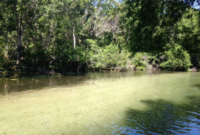 State Senator hears residents' concerns about Weeki Wachee River