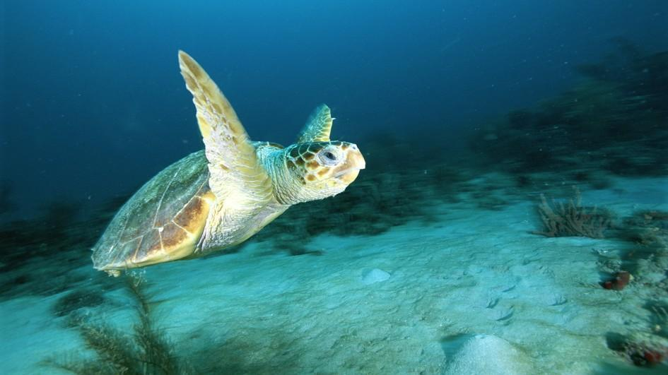 Happy #WorldTurtleDay! Celebrate by learning about the endangered loggerhead sea turtle: https://t.co/X6lhSyYaBD https://t.co/AtPhWrujop