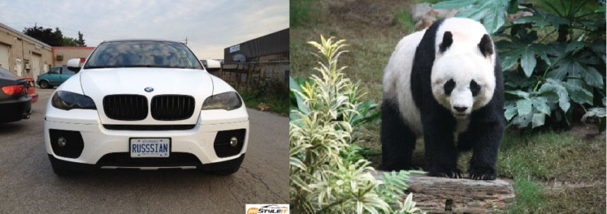I guess a white X6 does look like a panda