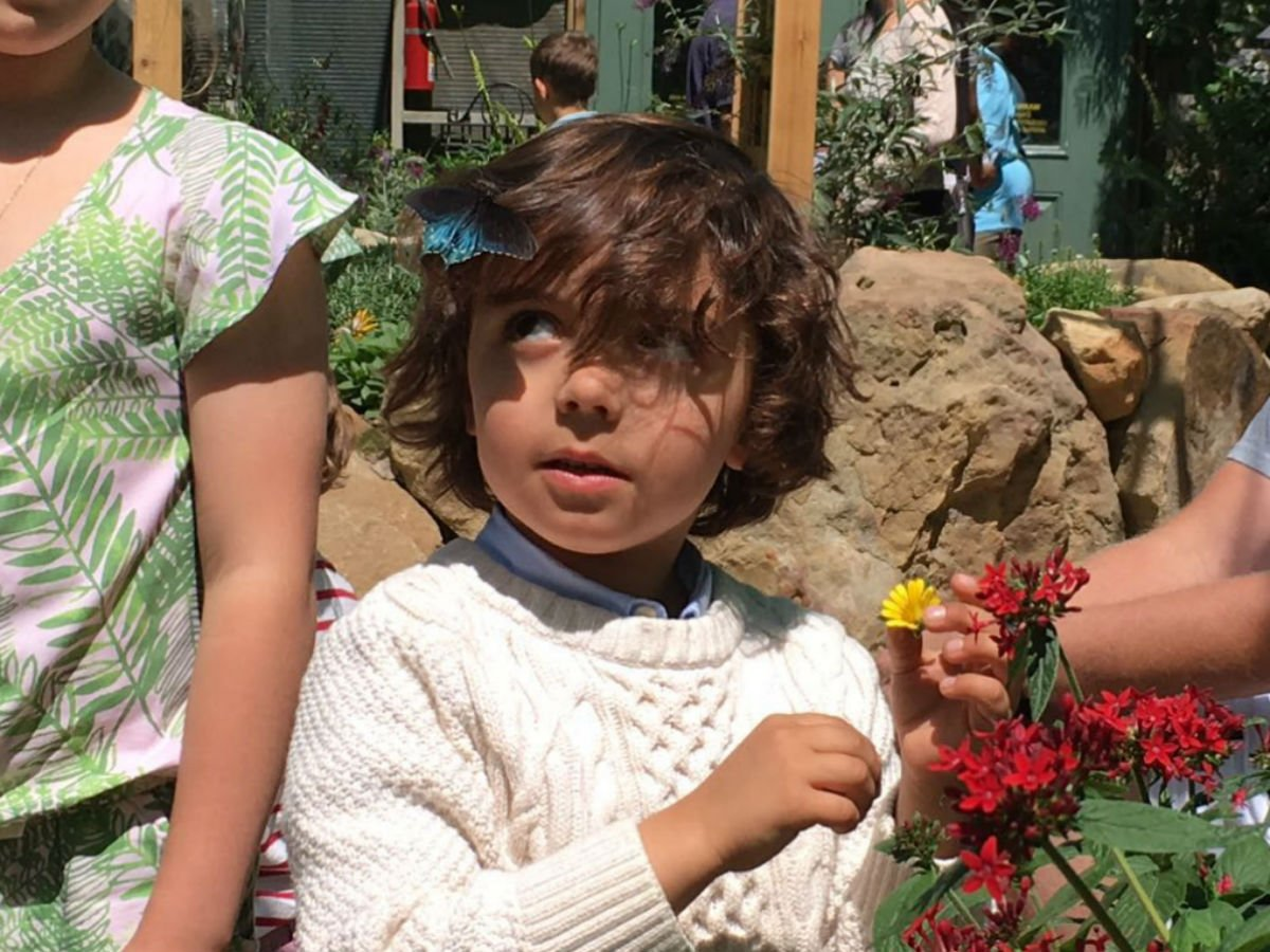 He was really hoping a butterfly would land on him and then this happened! Thank you @sbnature! @VisitCalifornia #ad https://t.co/qFmkCWySpB