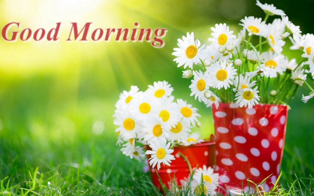 Adnan Ahmad On Twitter Good Morning Images Hd New Free Download
