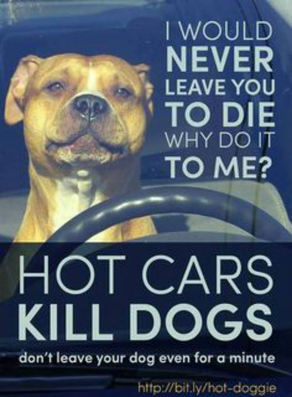 Keep this in mind, it only takes minutes to kill a dog. https://t.co/yVc4IHItw6