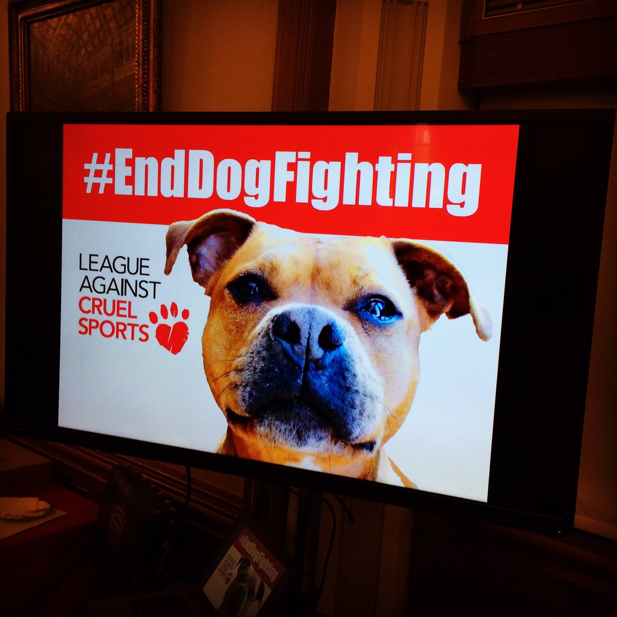 Very privileged to be at the #housesofparliment today to discuss how to #EndDogFighting Cc @rickygervais https://t.co/tc5t9wuBsx