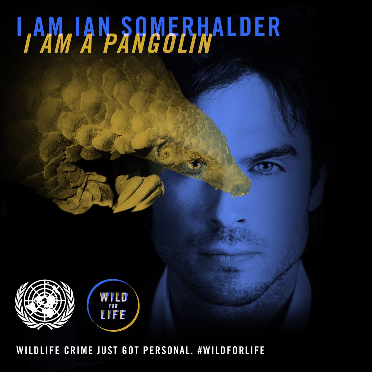 I am Ian. I am a Pangolin. What are you? Find your kindred species https://t.co/uCxCKgwCJC #Wildforlife