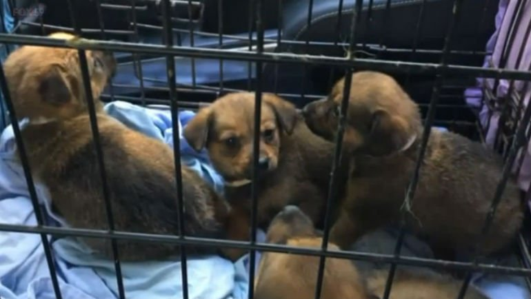 Hoarding nightmare: 82 dogs pulled from Indiana home infested with 100,000 rats