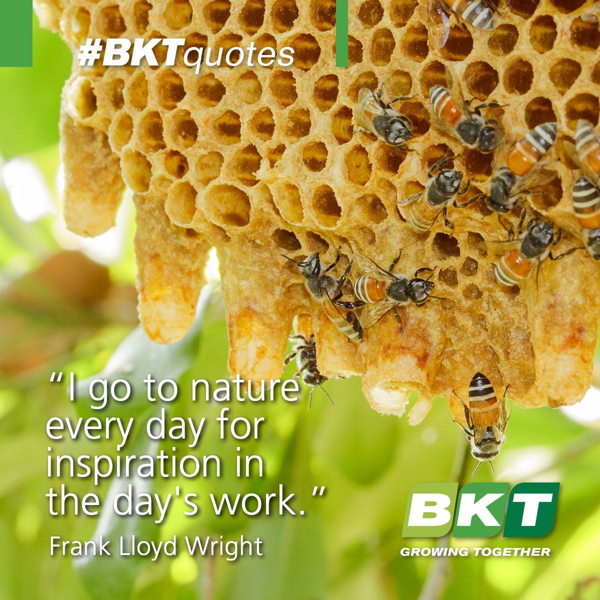 Let Nature be your inspiration! #BKTquotes #nature #quote https://t.co/MO5UKN6yqx