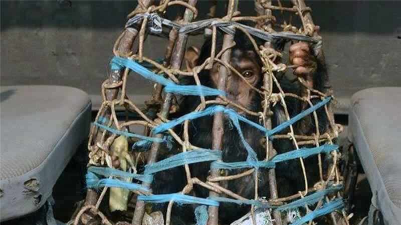 RT @AssaadRazzouk Wildlife Crime: Poachers Making Billions Abducting Animals In Africa, Asia to Sell Worldwide https://t.co/lqLge5VDvJ