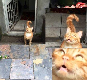 23張「讓狗派都會變心」的超萌貓咪照 他逮到貓皇跟「外星人溝通」的瞬間!