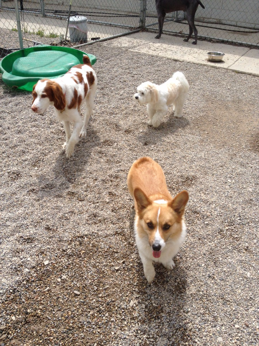 Best buds Patrick, Marshall and Chip H. go for a stroll together