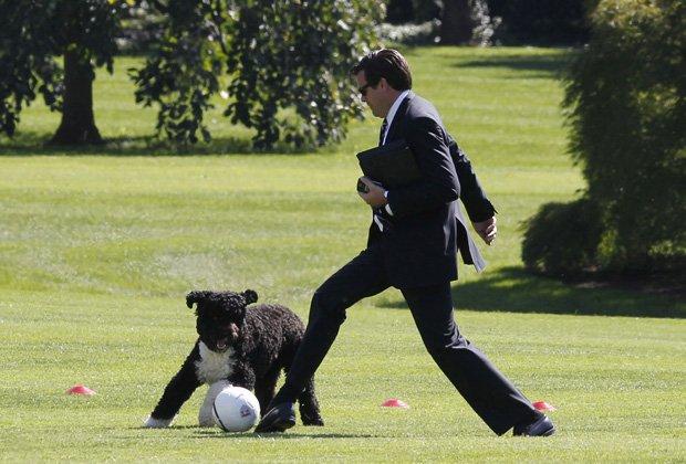 オバマ大統領の犬もやっぱり普通に自由な犬!