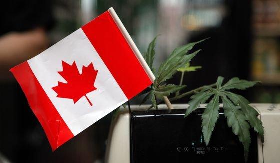 Toronto police raid 43 marijuana dispensaries, seize hundreds of pounds of pot