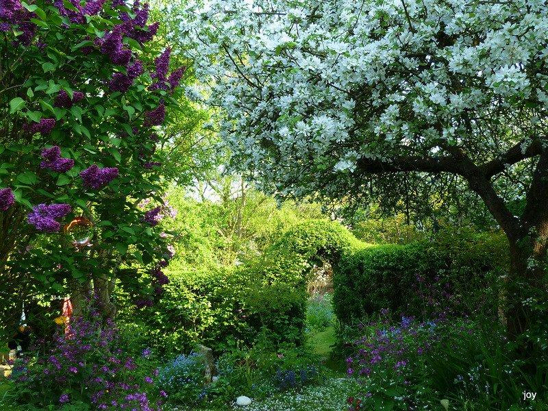 цветение в темном углу сада фото письменным заморачиваться