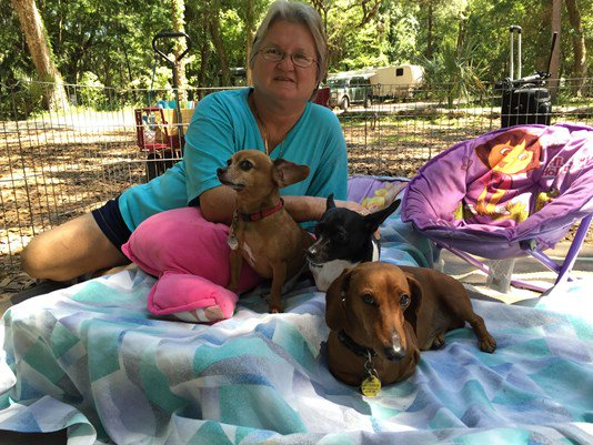 Woman, dogs create 'Perfect 10' family
