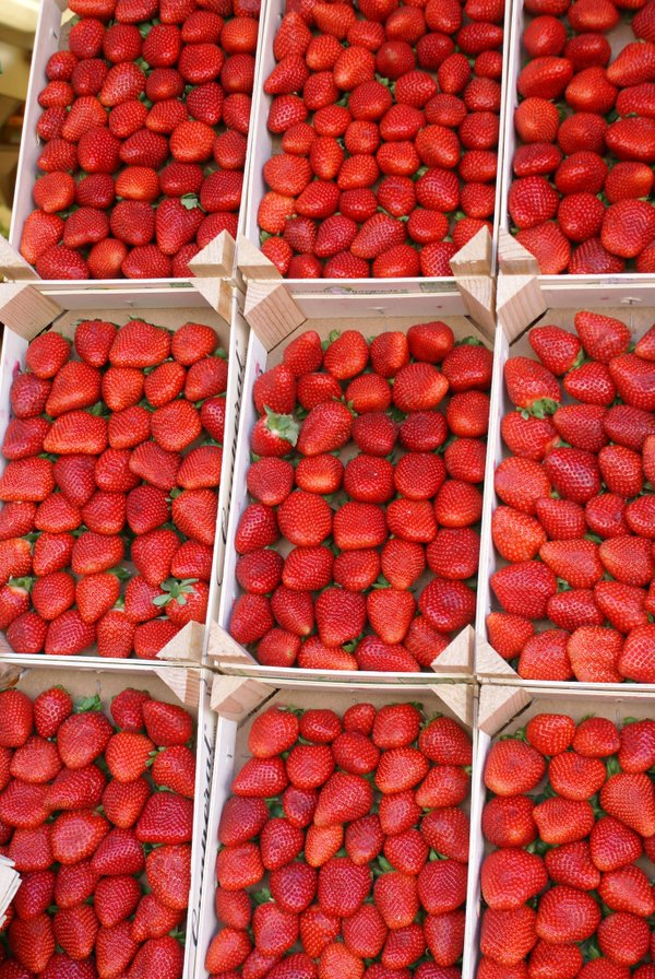 Replying to @sterlingheights: 13 festivals for #MichiganFood lovers   🍓🍎🍒