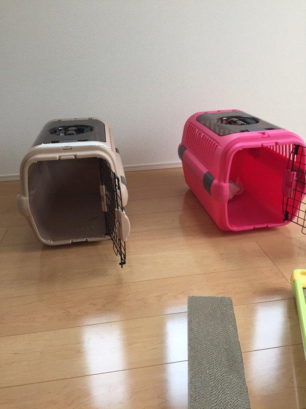 引越し先で作業中に邪魔にならないように空き部屋にニャン娘たちを避難させといて、数分後様子を見に行ったら見当たらない。 隠れる場所もないしどこやーと見渡したらトイレに猫影が、、恐る恐る開いたら二匹共トイレでみっちりと丸まってて草不可避 https://t.co/VElO3VkTSn